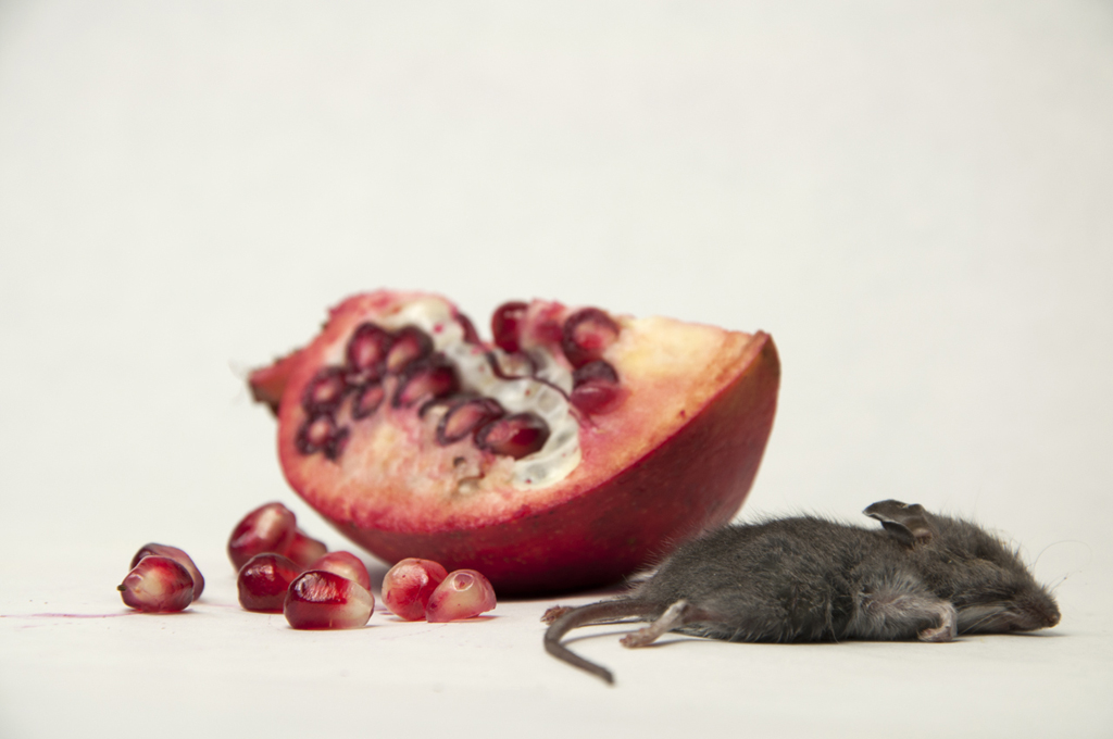 Debbie Lerman_Mouse and Pomegranate_1024